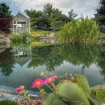 Add A Water Garden To Your Outdoor Living Space