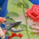 Essential Gardening Tools For Your Home Garden