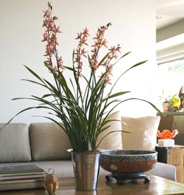 Spice Up Your Decor With Artificial Plants
