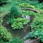 Considerations Before Installing A Koi Pond