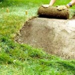 Useful Tips to Save Money in Landscaping