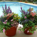 best ideas for container gardens