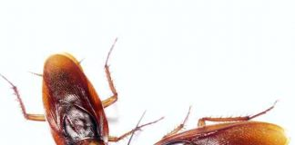 best ways to naturally get rid of pests