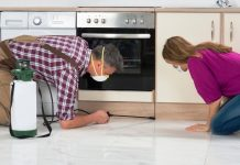 5 Ways to Protect Your Kitchen From Pests
