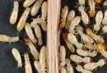 5 Ways to Get Rid of Termites from Your Home