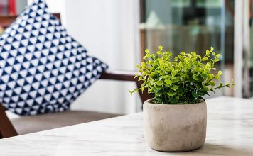Points To Consider While Growing Indoor Plants