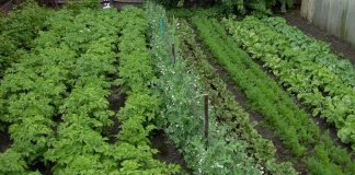 tips-for-growing-your-vegetable-garden